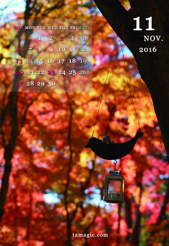 11トリと紅葉