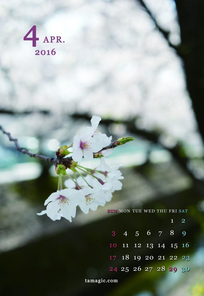tamagic_4桜